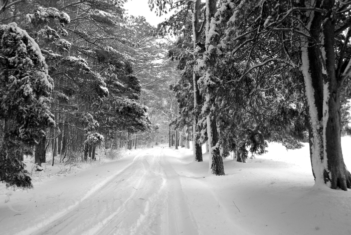 The Silent Snow