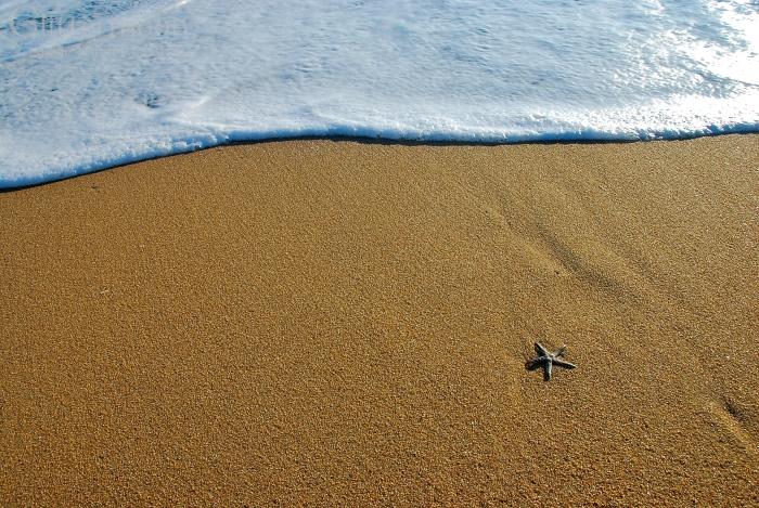 Starfish Dreaming