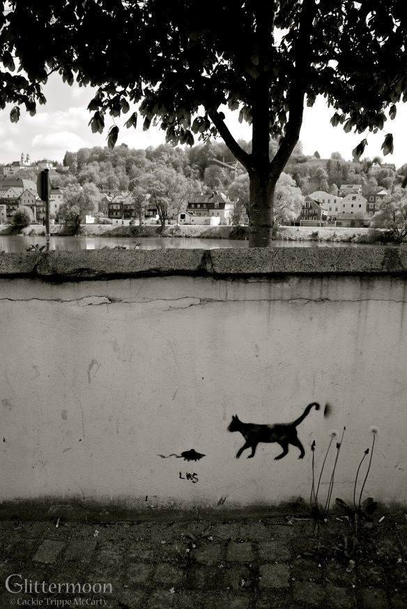 Cat and mouse - Passau, Germany