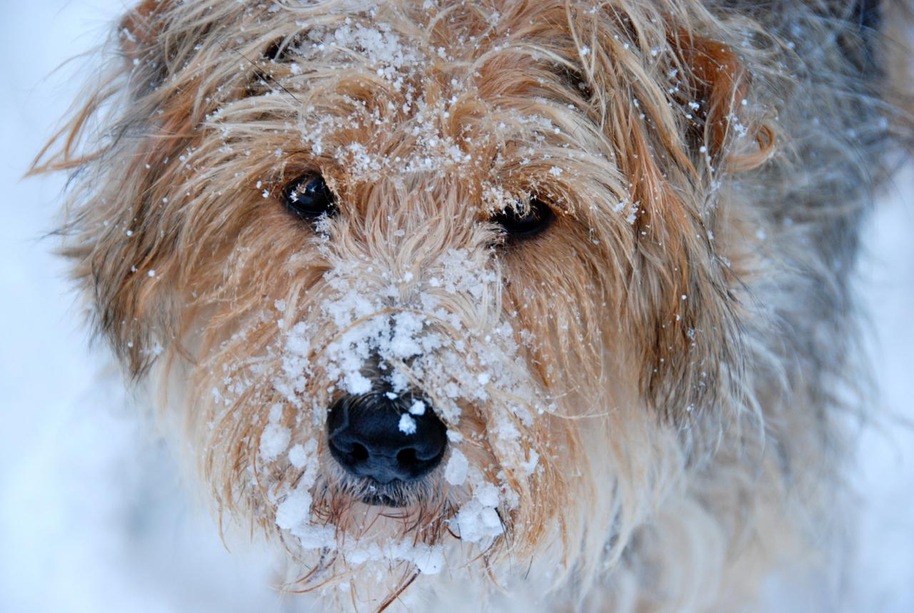 Emma, Dog of my Heart